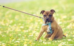 Любители собак смогут выгуливать своих питомцев у Стамбульского парка