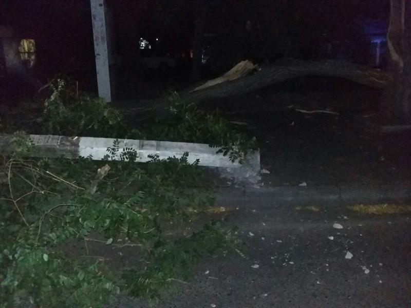 Под упавшее на Армейской дерево попали люди